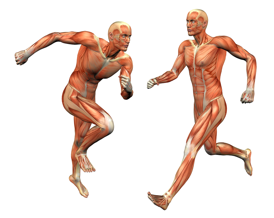Facia - the missing link to understand movement
